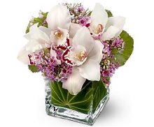 Teleflora Lovely Orchid