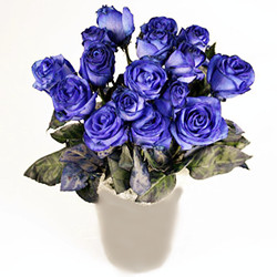 Medium blue roses (dozen)