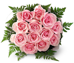 Dozen Pink roses (long stem)